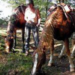 BZ Auf dem Rücken der Pferde